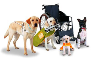 Types of Service Animals and Service Dogs